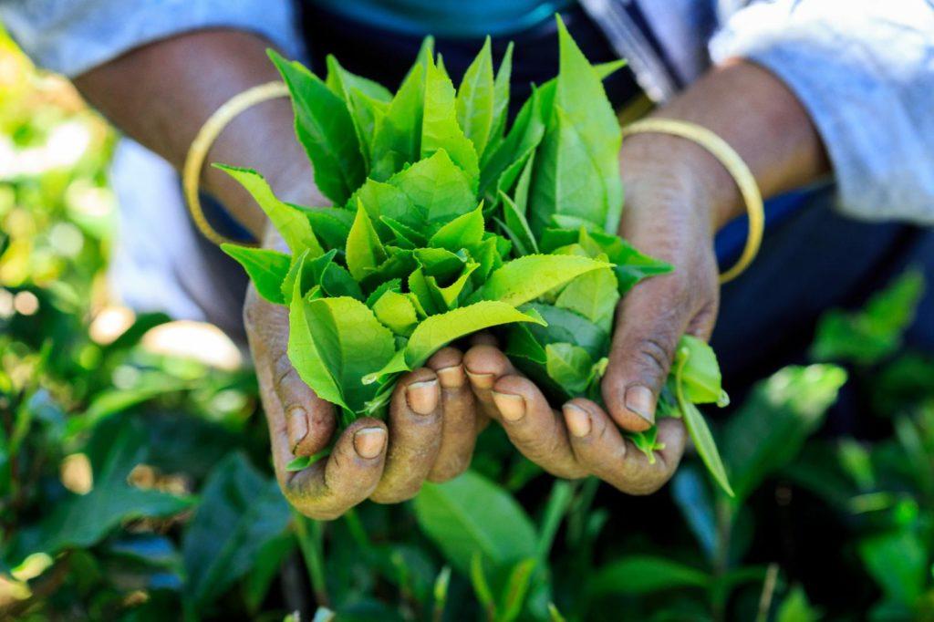 tea manufacturers in delhi